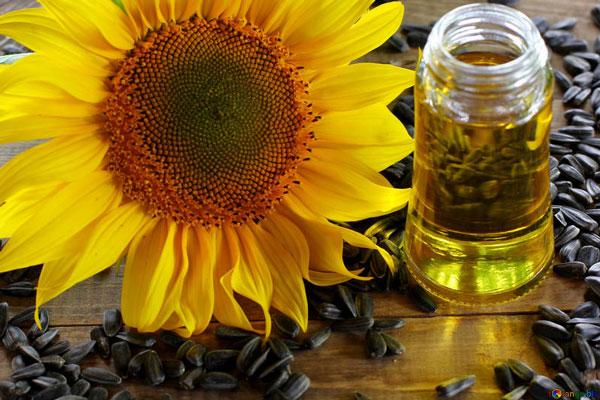 Aceite de semilla de girasol en la Cosmética